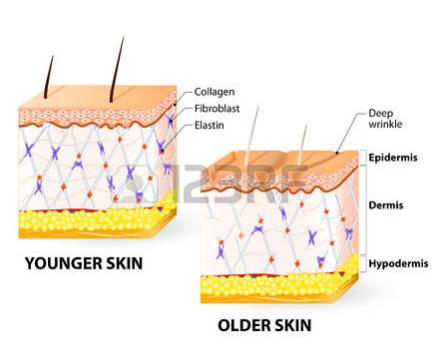 ما المقصود بالكولاجين؟